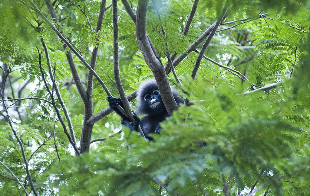 darmowe atrakcje dla dzieci Penang małpa na drzewie