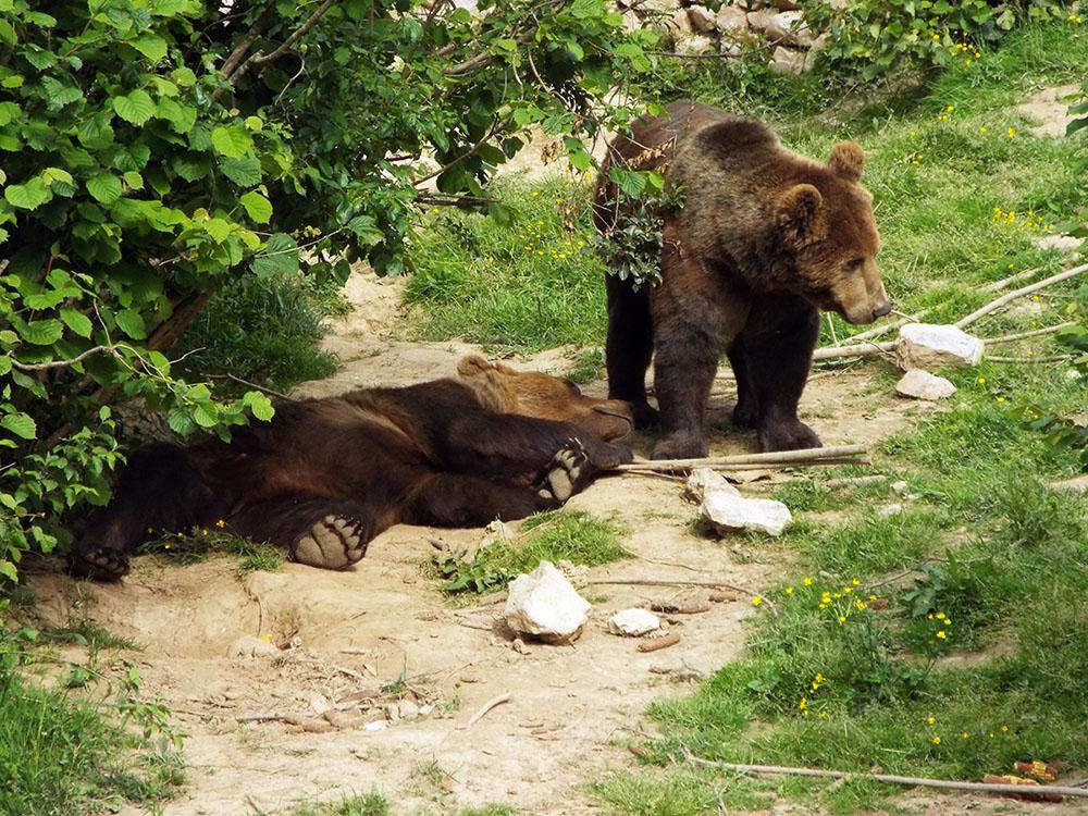 Chorwacja wakacje samochodem Kuterevo santuarium niedźwiedzi