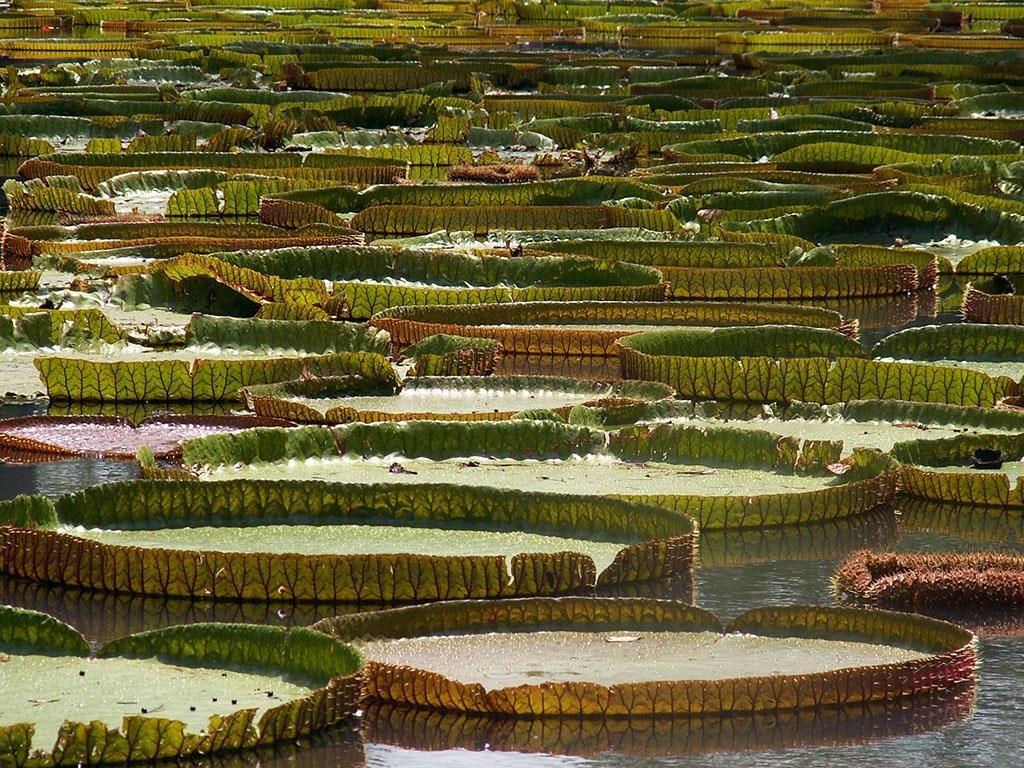 Wakacje na Mauritiusie Ogród Botaniczny