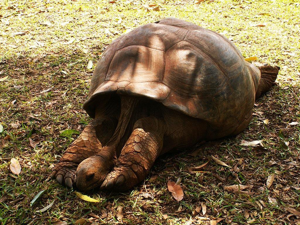 Wakacje na Mauritiusie Casela Bird Park żółwie