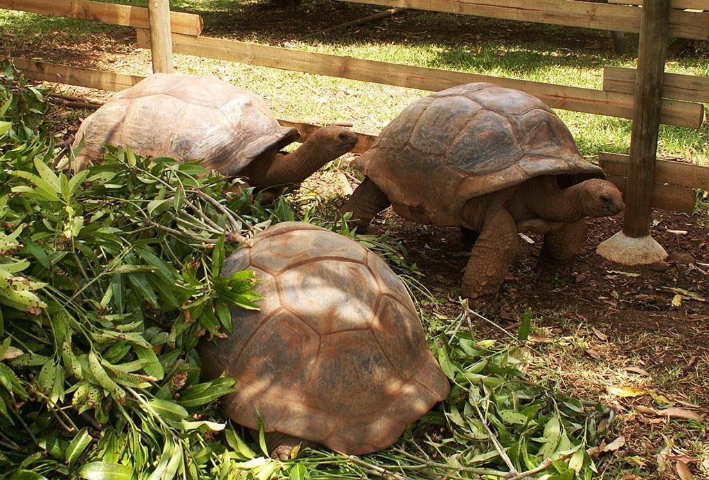 Wakacje na Mauritiusie Casela Bird Park karmienie żółwi