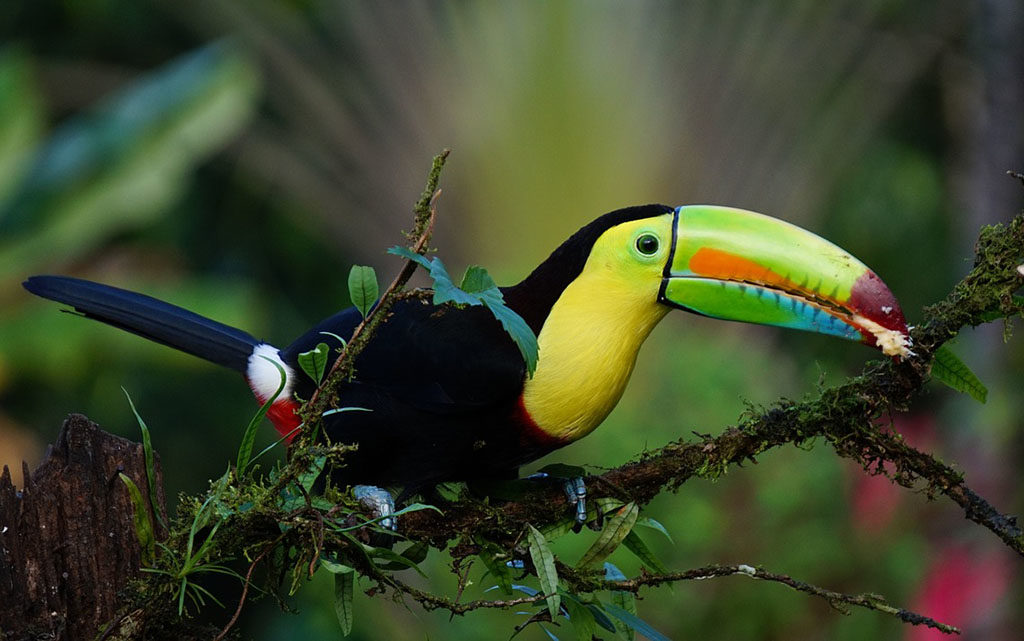 panama i kostaryka oferta tukan