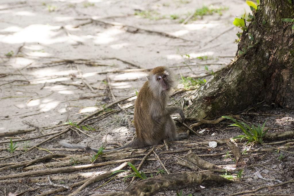 darmowe atrakcje dla dzieci Penang małpki