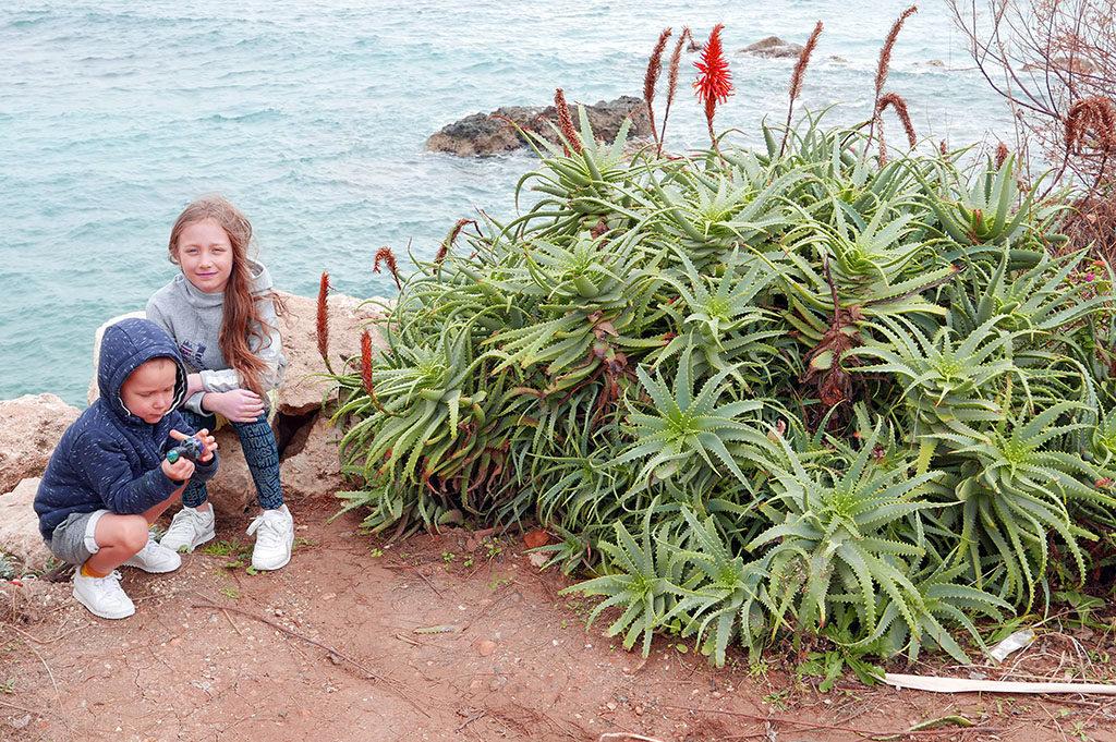cypr idealne miejsce na wakacje kaktus